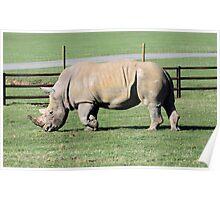 Rhinocerous Poster