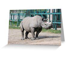 Rhinocerous 3 Greeting Card