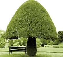 Topiary by rhallam