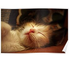 In your arms, I iz the cutest! Poster