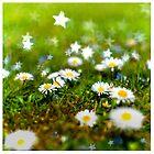 daisy stars by fraenk