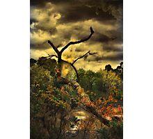 Tree Creek Photographic Print