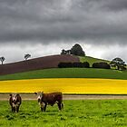 Layers On The Farm by Sandra Anderson