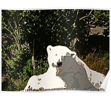 Miss Mercedes the Polar Bear Poster