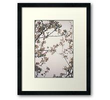 Faded blossom Framed Print