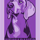 Weimaraner portrait in colourful poster-style by nimbus88
