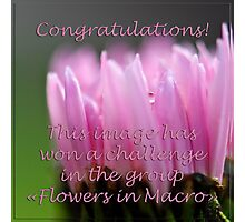 """Flowers in Macro"" Banner Photographic Print"