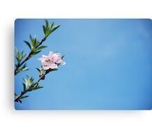 First Peach Blossom Canvas Print
