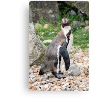 penguin 6 Canvas Print