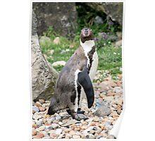 penguin 6 Poster