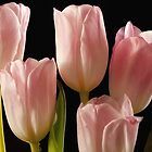Tulips for you by Kay Martin