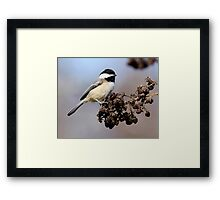 Finding a Purchase Framed Print
