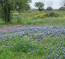 Texas Hill Country by Cathy Jones