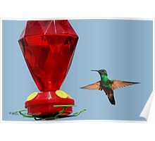 Hummingbird ... Lunch Time2 Poster