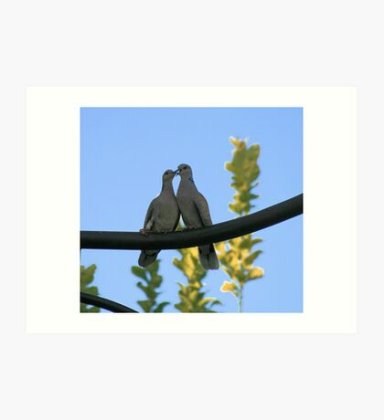 Pair of turtle doves Art Print