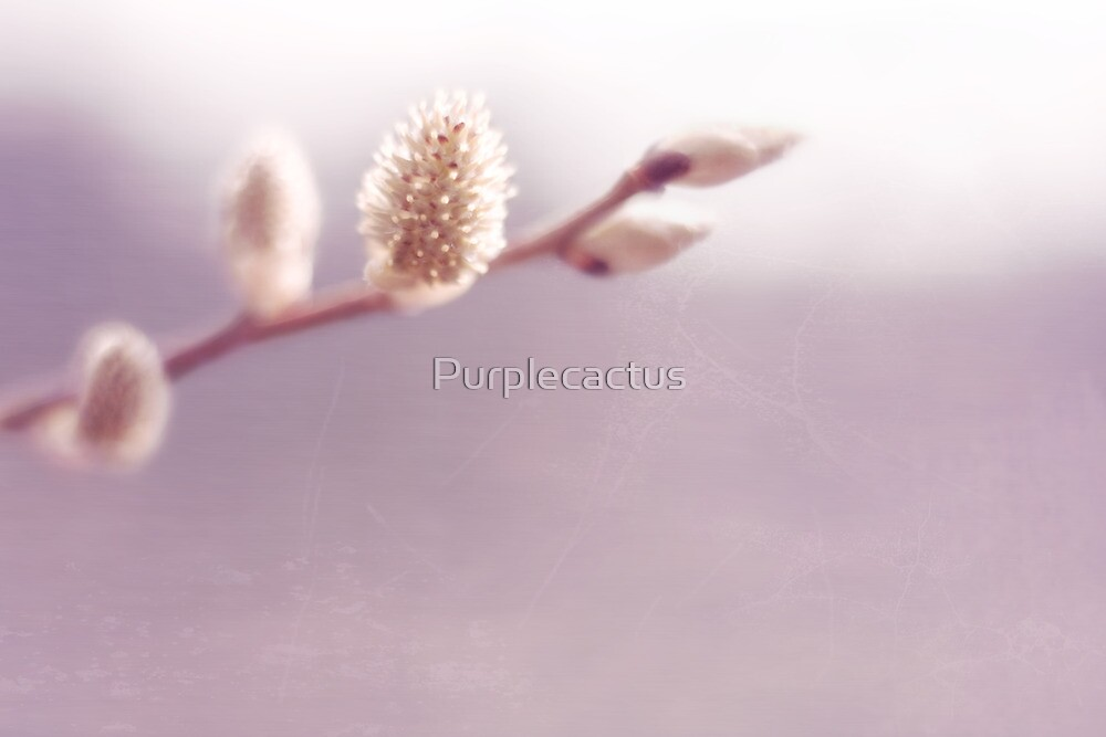 willow by Purplecactus