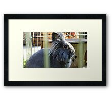 Grey rabbit Framed Print