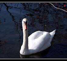 ONE SWAN by BOLLA67