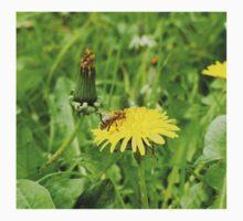 Bee on a dandelion Baby Tee