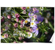 Buzzy Bee Poster
