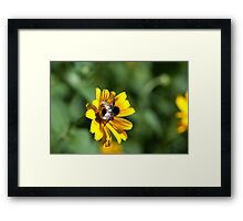 Bee on yellow flower Framed Print