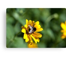 Bee on yellow flower Canvas Print