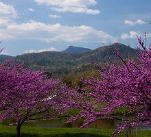 Mountains Landscapes of Western North Carolina by Karen Kaleta