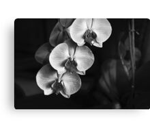 Fragility Canvas Print