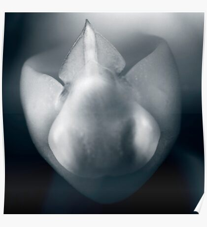 orchid-mono Poster