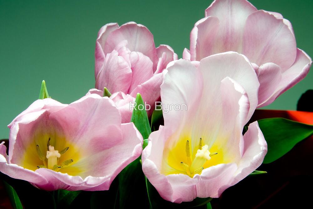 Tulips by Rob Byron
