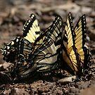 Butterfly Huddle by Jennifer Potter