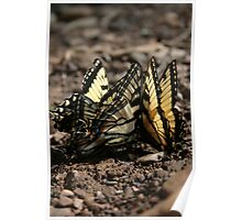 Butterfly Huddle Poster