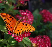 Wonderful Butterfly by CarmenLygia