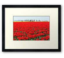 Fire Engine Red Tulips Framed Print