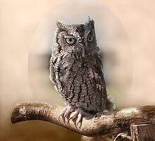 Screech owl by Gouzelka