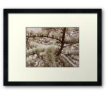 Fury fern Framed Print