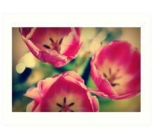 Tulips.... Art Print