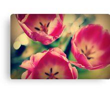 Tulips.... Canvas Print