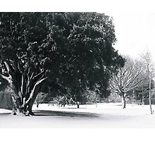 snowy trees clarence park black and white Photographic Print