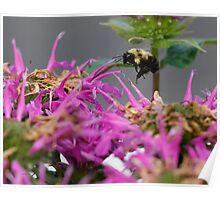 The Pollinator  Poster