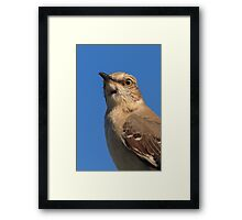 Mockingbird Portrait Framed Print