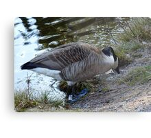 Water World - Mother Goose Grazing Metal Print