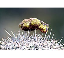 Balancing Act Photographic Print