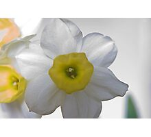 A Wee Bit Daffy - Take 2 Photographic Print