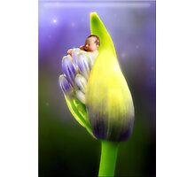 Agapanthas Emerging Photographic Print