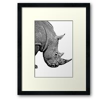 Rhinoceros on white background Framed Print