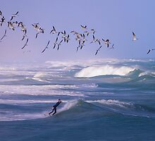 Black Skimmers With Surfer at Sebastian Inlet,Florida by Court Roberts