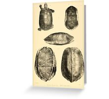 The Reptiles of British India by Albert C L G Gunther 1864 0489 Cuora Flavomarginata, Cyclemys Oldharai Turtle Greeting Card