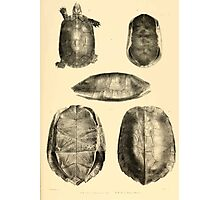 The Reptiles of British India by Albert C L G Gunther 1864 0489 Cuora Flavomarginata, Cyclemys Oldharai Turtle Photographic Print