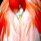 Flame I - Ft Worth Zoo by Michelle Garrison
